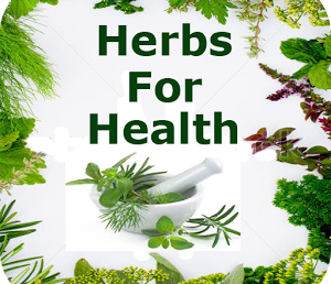 Why Herbs Are Important in Our Life?